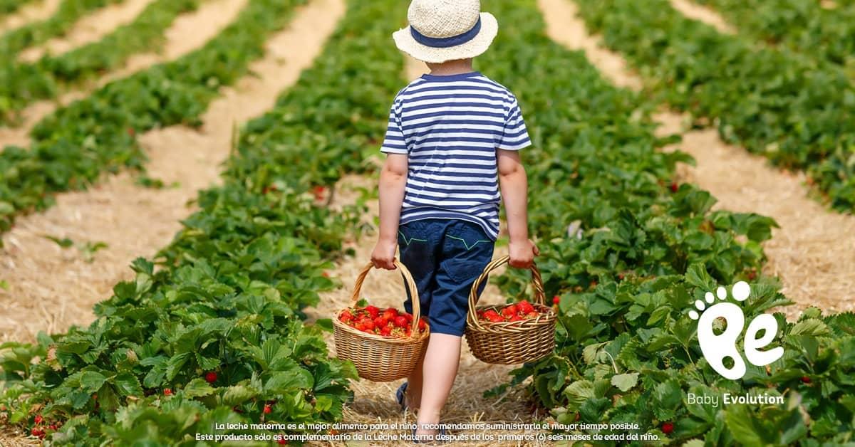 Alimentos orgánicos: ¿qué son y dónde conseguirlos?