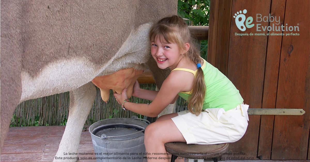 Verdades y mentiras de la leche de vaca en la alimentación infantil - No solo de vaca
