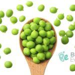 Cómo ofrecer la arveja verde